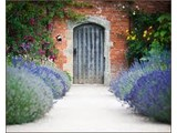 The Walled Garden at Cowdray - Marquee Venue